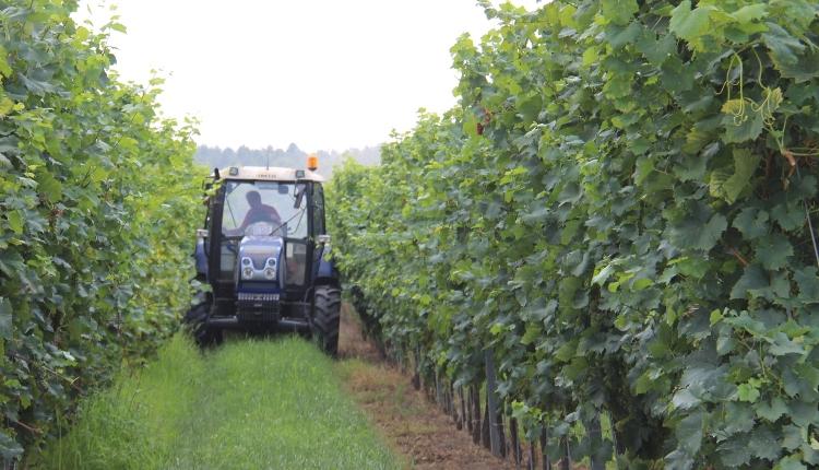 Traktor, ültetvény